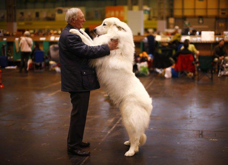 15. mesto: Arthur Ward in njegov pes med pasjo razstavo v Birminghamu.