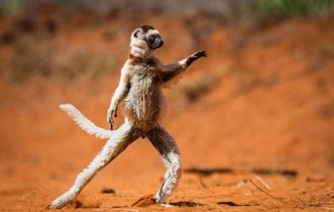 Finalisti natečaja Comedy Wildlife Photography Awards 2015