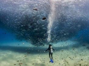 18. ''Vse ribe v morju'', Cabo Pulmo