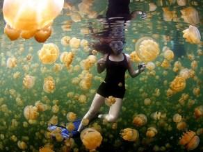 17. Meduze, Polinezija