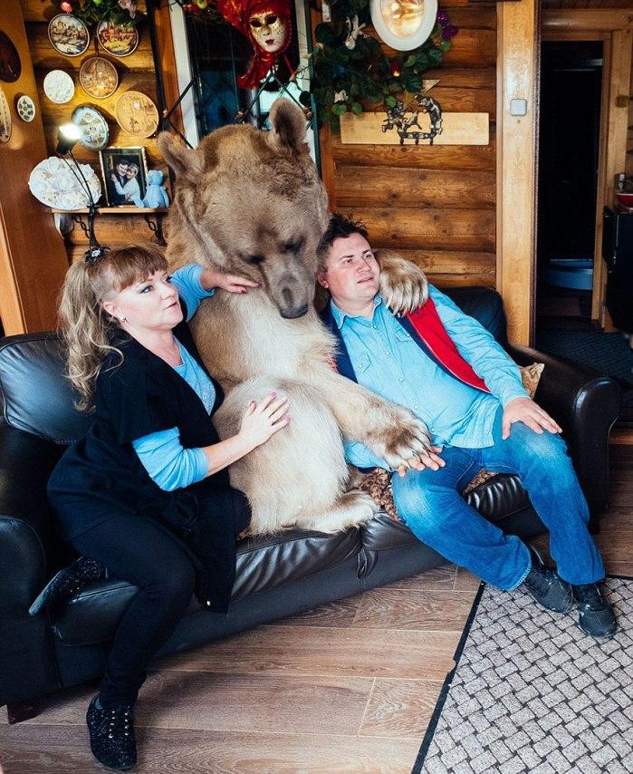 Medved kot hišni ljubljenček