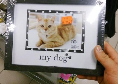 Od kaj so psi mačke?