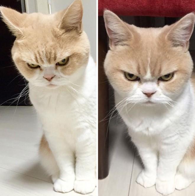Mački se lastniku dobrikajo le, ko se želijo crkljati ali so lačni.