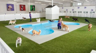 Terminal za živali ARK