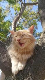Muca, ki ji je prvič uspelo splezati na drevo.