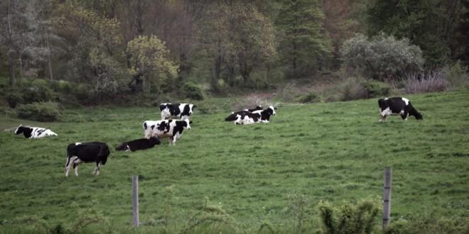 Lokalna proizvodnja in kmetije izginjajo.