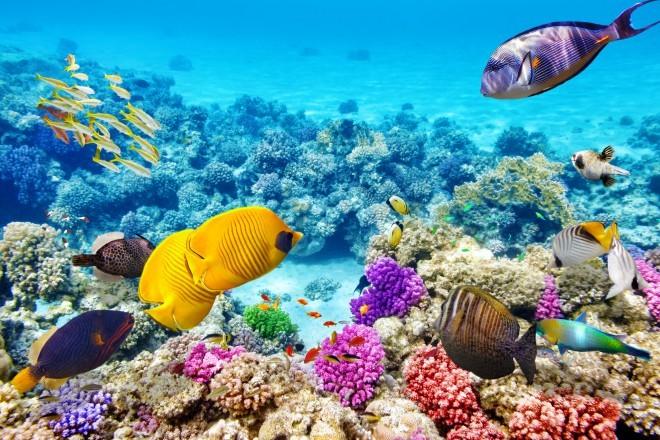Veliki koralni greben, Avstralija