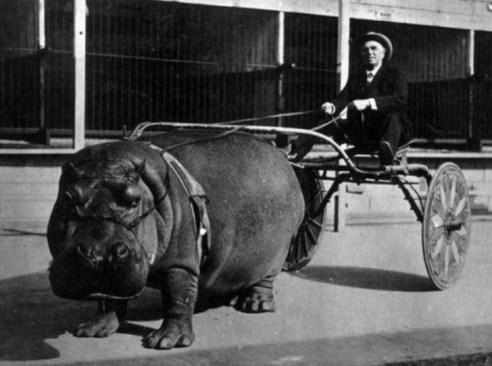 1924: Vožnja s podvodnim konjem