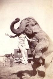 1937: Glava cirkusantke v ustih slona