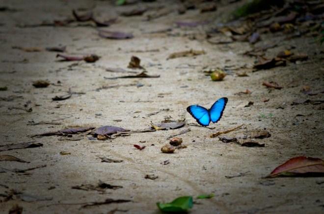 Sijaj na krilih metuljev ni zgolj lep, ampak ima vlogo tudi pri razvoju 'zelenih virov energije'.