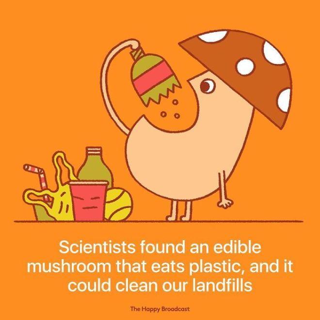 Znanstveni so odkrili vrsto glive, ki se je zmožna prehranjevati s plastiko.