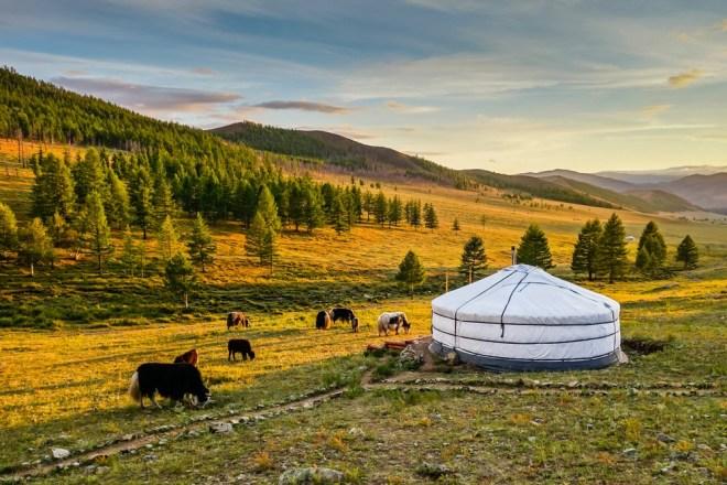 Mongolija je dežela travnatih sipih.