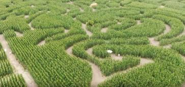 Foto: Koruzni labirint