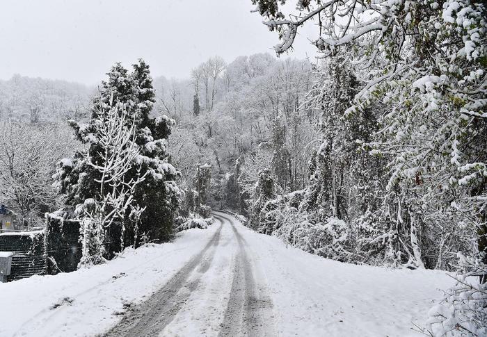 albero-cade-per-la-neve-ed-uccide-un-uomo-in-provincia-di-varese.