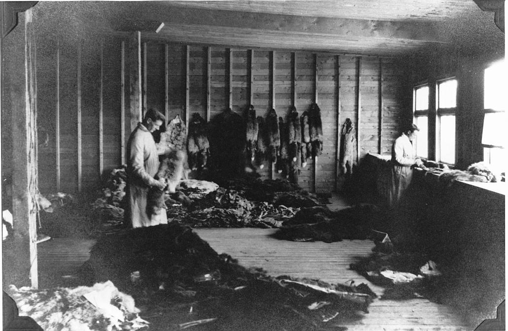 Interior, Revillon Frères fur room, circa 1905. McCord Museum, MP-1976.26.64