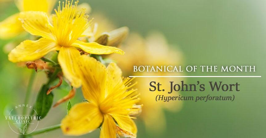 St. John's Wort | Annex Naturopathic Clinic | Toronto Naturopath
