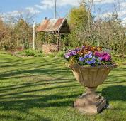 The garden at Solus Street, Braidwood.