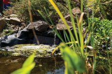Open Garden – 3 Ramage Place, Flynn