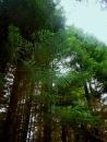 connifers-bendora-arboretum_1