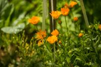 Open Garden - Holt-12