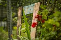 Open Garden - Holt-23