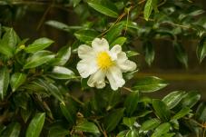 Open Garden - Holt-25
