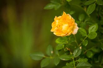 Open Garden - Holt-9