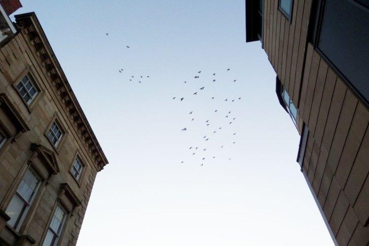 york sky
