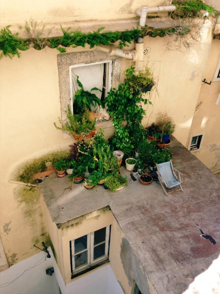 Plants in Lisbon