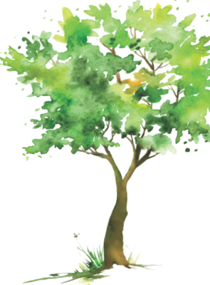 watercolor tree rendering