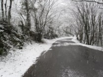 Belgrade Forest (Istanbul) under snow, January 2012 (photo 24 of 95)
