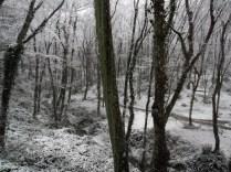 Belgrade-Forest-under-snow-January-2012-25