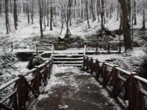 Belgrade-Forest-under-snow-January-2012-37