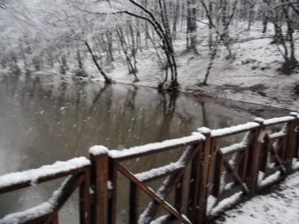 Belgrade-Forest-under-snow-January-2012-39