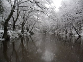 Belgrade-Forest-under-snow-January-2012-40
