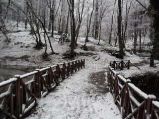 Belgrade-Forest-under-snow-January-2012-41