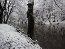 Belgrade-Forest-under-snow-January-2012-43