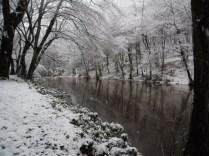 Belgrade-Forest-under-snow-January-2012-44