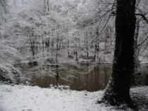 Belgrade-Forest-under-snow-January-2012-47