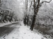 Belgrade-Forest-under-snow-January-2012-48
