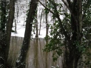 Belgrade-Forest-under-snow-January-2012-52