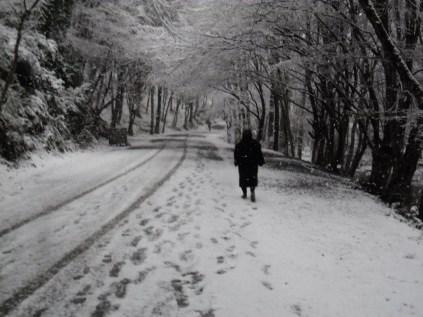 Belgrade-Forest-under-snow-January-2012-53