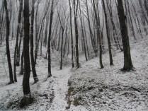 Belgrade-Forest-under-snow-January-2012-56