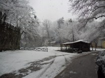 Belgrade-Forest-under-snow-January-2012-58