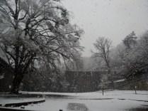 Belgrade-Forest-under-snow-January-2012-60