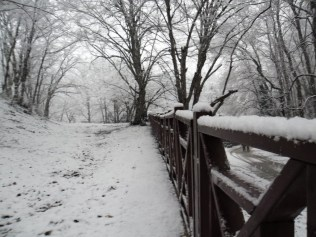 Belgrade-Forest-under-snow-January-2012-63