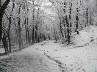 Belgrade-Forest-under-snow-January-2012-64