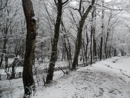 Belgrade-Forest-under-snow-January-2012-65