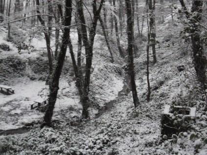 Belgrade-Forest-under-snow-January-2012-73