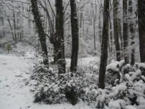 Belgrade-Forest-under-snow-January-2012-79